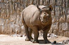 Free Rhinoceros Royalty Free Stock Image - 9879506
