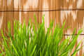 Free Fresh Grass Royalty Free Stock Image - 9882016