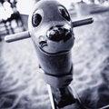Free Seal Spring Ride Stock Photos - 9883683