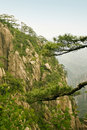 Free Chinese Mountain: Pine Trees And Steep Cliff Royalty Free Stock Image - 9888006