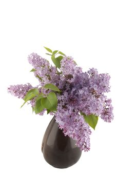 Bunch Of Lilac Flowers Royalty Free Stock Photography