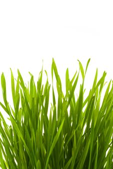 Free Fresh Grass Royalty Free Stock Photography - 9882077