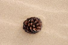Free Pine Cone On Beach Stock Photography - 9884032