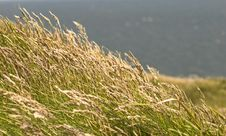 Free Ireland -Grass Over Cliffs Stock Photography - 9884402