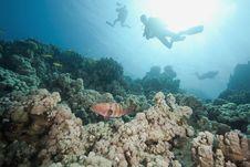 Free Ocean, Sun And Fish Stock Photos - 9885133