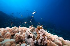 Free Ocean, Sun And Giant Clam Stock Photography - 9885192