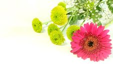 Free Spring Bouquet With Gerber Isolated On White Royalty Free Stock Photo - 9887405