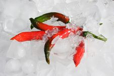 Free Chillies On Ice Royalty Free Stock Image - 9888216