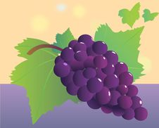 Free Grapevine Bunch. Royalty Free Stock Images - 9888709