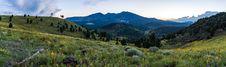 Free Summer Wildflowers East Of The Peaks Stock Image - 98845681
