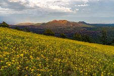 Free Summer Wildflowers East Of The Peaks Royalty Free Stock Photos - 98845708