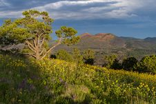 Free Summer Wildflowers East Of The Peaks Royalty Free Stock Photos - 98845728