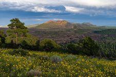 Free Summer Wildflowers East Of The Peaks Royalty Free Stock Image - 98845736