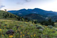 Free Summer Wildflowers East Of The Peaks Stock Image - 98845751