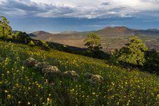 Free Summer Wildflowers East Of The Peaks Stock Photos - 98845783