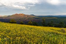 Free Summer Wildflowers East Of The Peaks Royalty Free Stock Image - 98845826