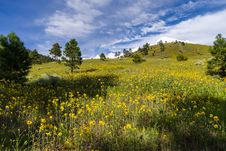 Free Summer Wildflowers East Of The Peaks Royalty Free Stock Photos - 98845938