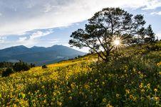 Free Summer Wildflowers East Of The Peaks Stock Image - 98864111