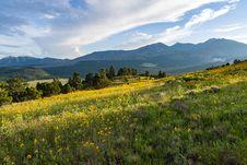 Free Summer Wildflowers East Of The Peaks Stock Images - 98864114