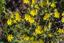 Free Summer Wildflowers East Of The Peaks Stock Photography - 98864152