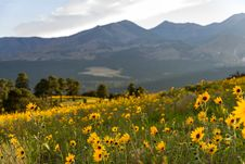 Free Summer Wildflowers East Of The Peaks Stock Photography - 98864172