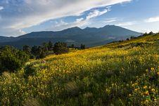 Free Summer Wildflowers East Of The Peaks Stock Images - 98864264