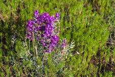 Free Summer Wildflowers East Of The Peaks Royalty Free Stock Images - 98864319