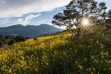 Free Summer Wildflowers East Of The Peaks Stock Photos - 98864323