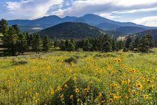 Free Summer Wildflowers East Of The Peaks Stock Images - 98864334