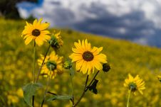 Free Summer Wildflowers East Of The Peaks Royalty Free Stock Images - 98864369