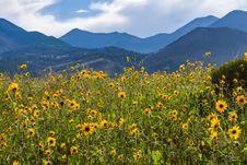 Free Summer Wildflowers East Of The Peaks Royalty Free Stock Image - 98864386