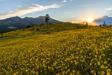 Free Summer Wildflowers East Of The Peaks Royalty Free Stock Photos - 98864408