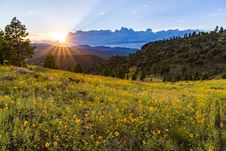 Free Summer Wildflowers East Of The Peaks Royalty Free Stock Photography - 98864427