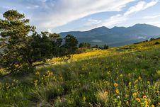 Free Summer Wildflowers East Of The Peaks Stock Image - 98864431