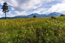 Free Summer Wildflowers East Of The Peaks Royalty Free Stock Photos - 98864498