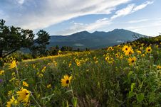 Free Summer Wildflowers East Of The Peaks Stock Photo - 98864550