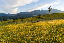 Free Summer Wildflowers East Of The Peaks Stock Images - 98864564
