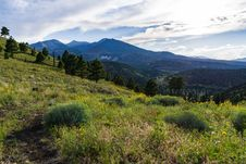 Free Summer Wildflowers East Of The Peaks Stock Images - 98864574