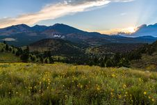 Free Summer Wildflowers East Of The Peaks Royalty Free Stock Images - 98864639