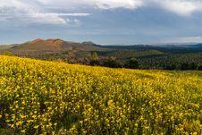 Free Summer Wildflowers East Of The Peaks Stock Photos - 98864973