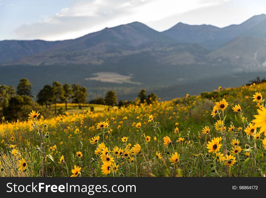 Summer Wildflowers east of the Peaks