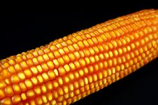 Free Corn On The Cob Royalty Free Stock Photography - 9893117
