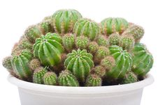Free Cactus Bush In A Flowerpot Royalty Free Stock Image - 9893256