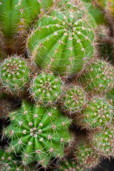 Free Macro Image Of Cactus Bush. Stock Photos - 9893273