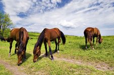 Wild Steppe Horses Stock Photography