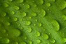 Free Waterdrops On A Leaf Royalty Free Stock Photography - 9894197