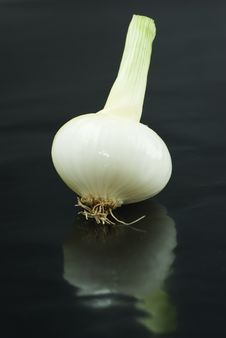 Free White Onion On Black Background Stock Photography - 9894412