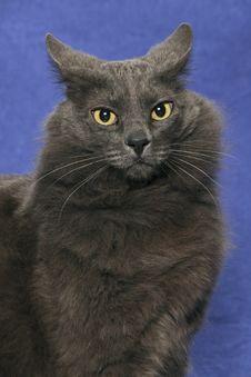 Free Cat Royalty Free Stock Photo - 9894495