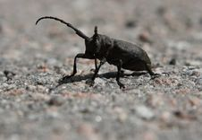 Free Beetle In Stone Stock Photos - 9895043