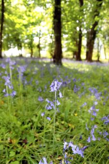 Free Wild Blue Woods Stock Photography - 9895812